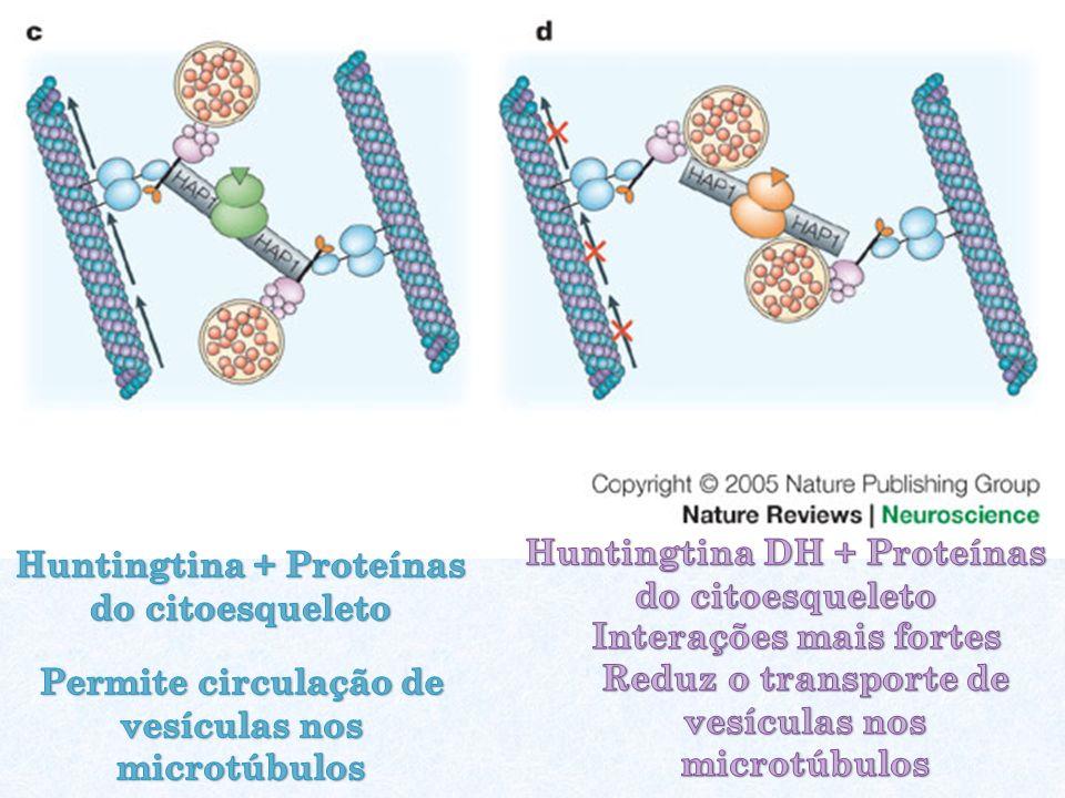 Huntingtina DH + Proteínas do citoesqueleto