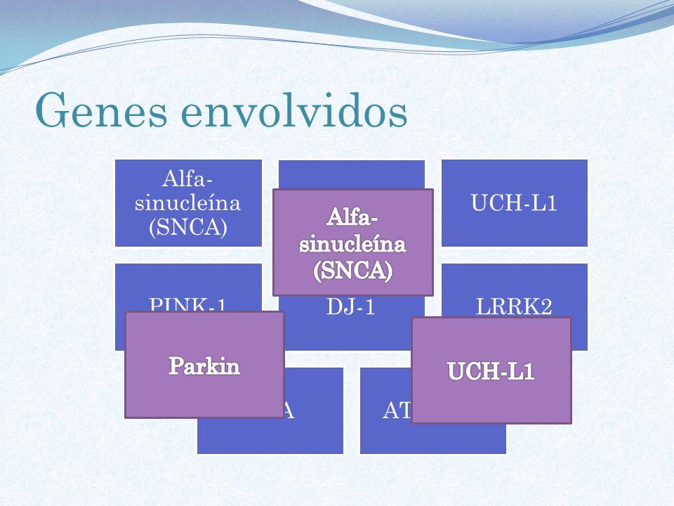 Genes envolvidos Alfa-sinucleína (SNCA) Parkin UCH-L1