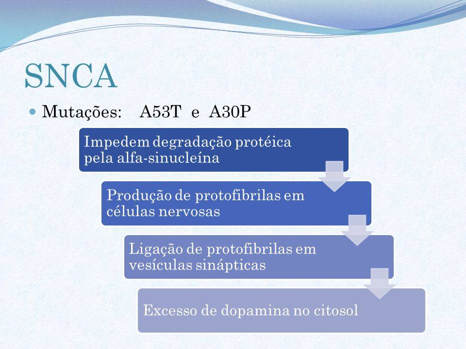 SNCA Mutações: A53T e A30P. Impedem degradação protéica pela alfa-sinucleína. Produção de protofibrilas em células nervosas.