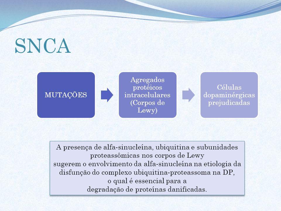 SNCA MUTAÇÕES. Agregados protéicos intracelulares (Corpos de Lewy) Células dopaminérgicas prejudicadas.