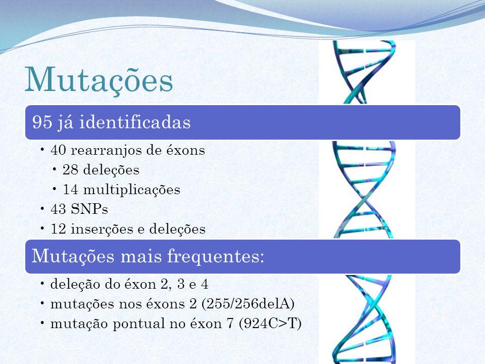 Mutações 95 já identificadas 40 rearranjos de éxons 28 deleções