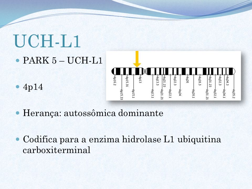 UCH-L1 PARK 5 – UCH-L1 4p14 Herança: autossômica dominante