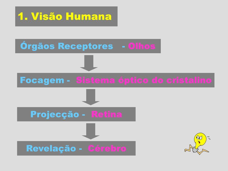 1. Visão Humana Órgãos Receptores - Olhos