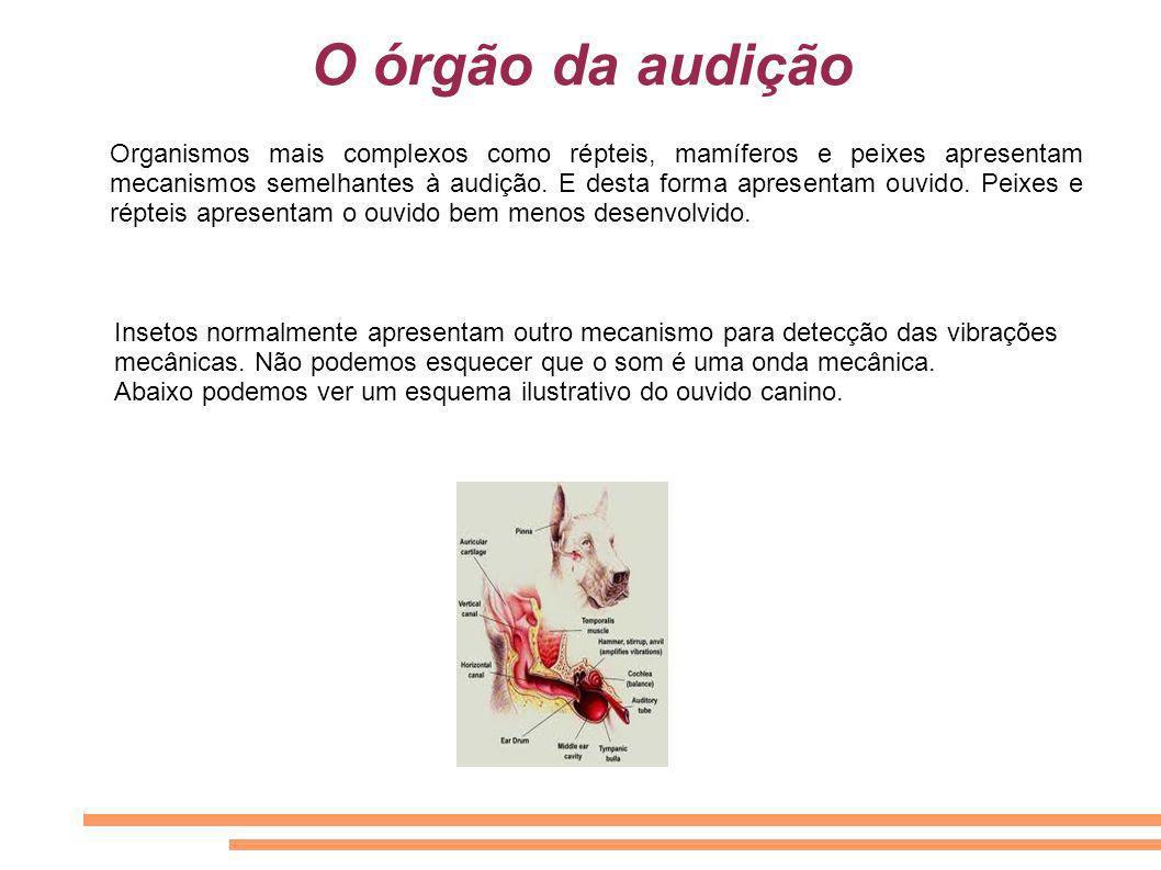 O órgão da audição