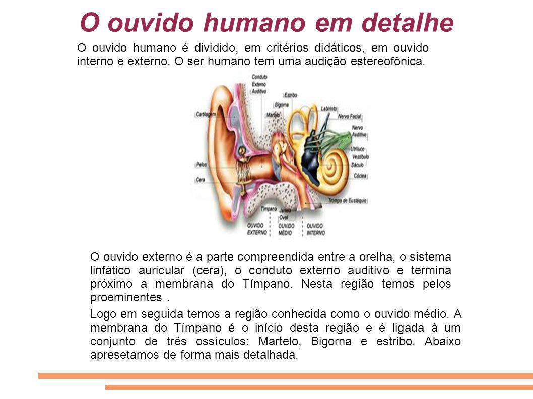 O ouvido humano em detalhe