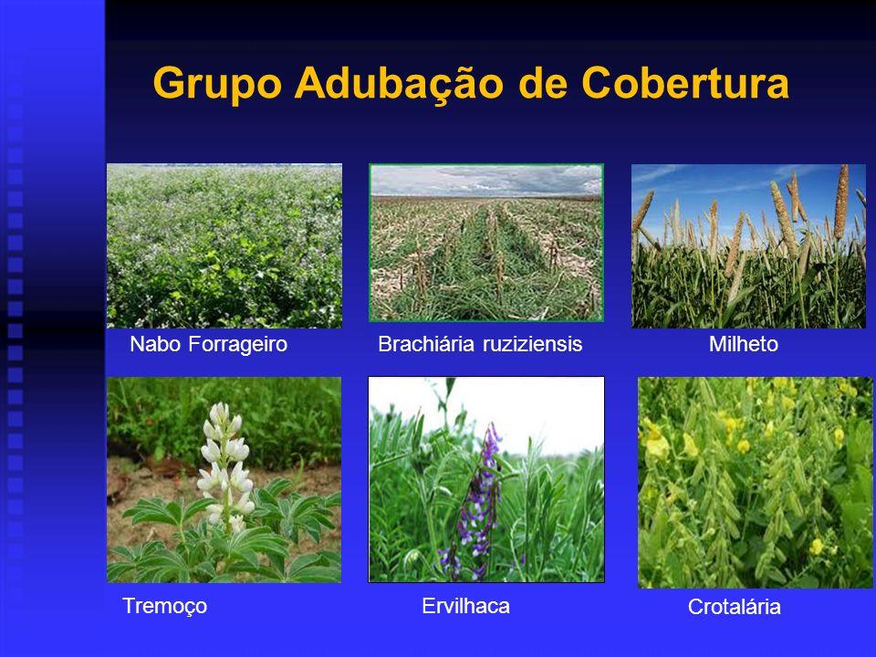Grupo Adubação de Cobertura
