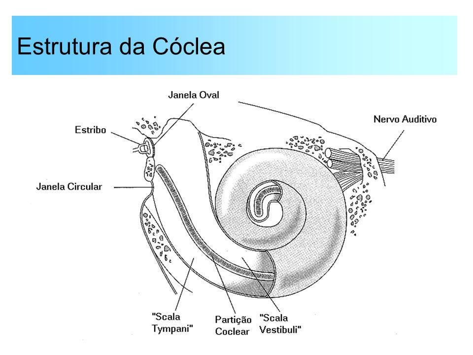 Estrutura da Cóclea
