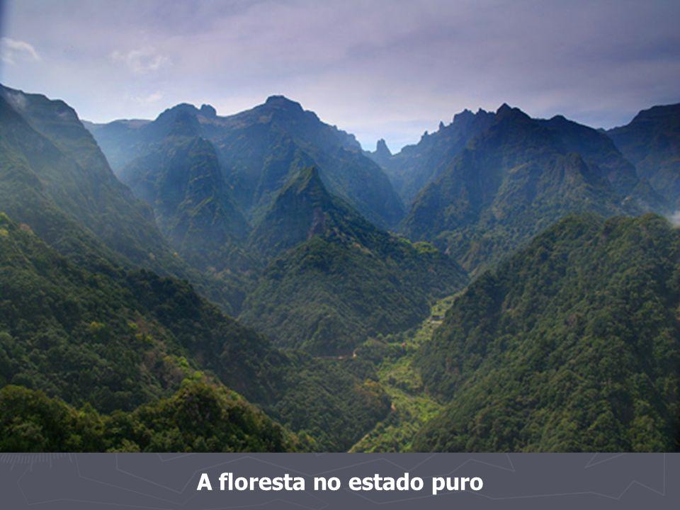 A floresta no estado puro