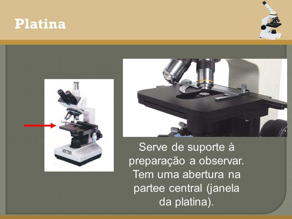 Platina Serve de suporte à preparação a observar.