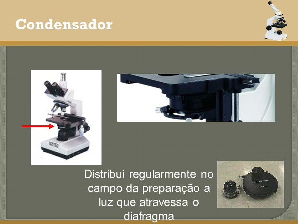Condensador Distribui regularmente no campo da preparação a luz que atravessa o diafragma
