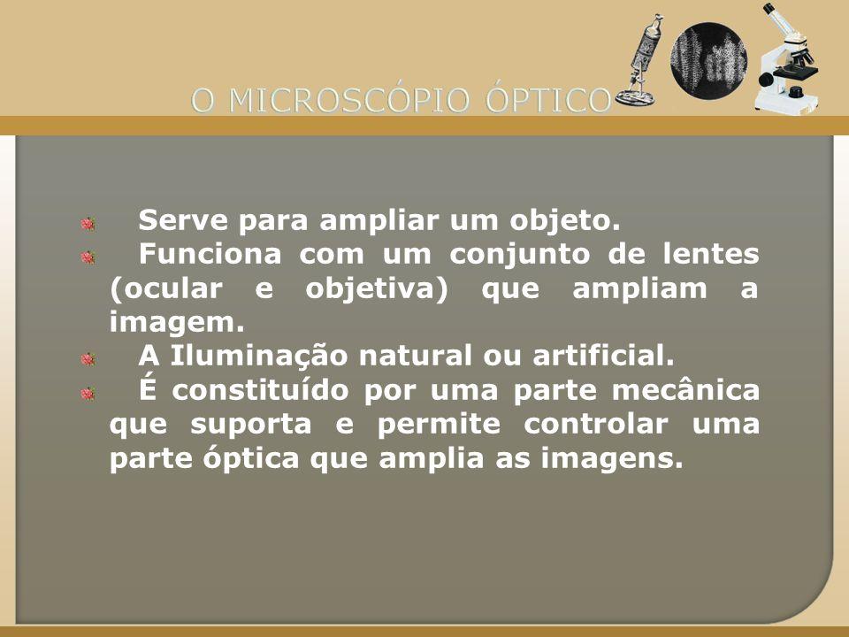 O MICROSCÓPIO ÓPTICO Serve para ampliar um objeto.