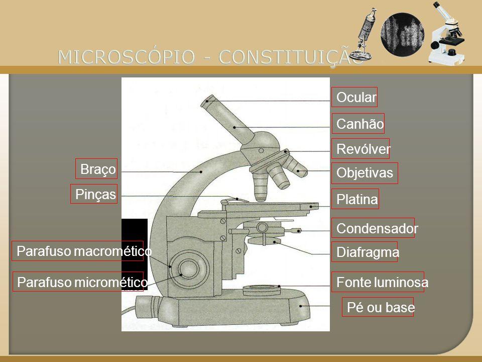MICROSCÓPIO - CONSTITUIÇÃO
