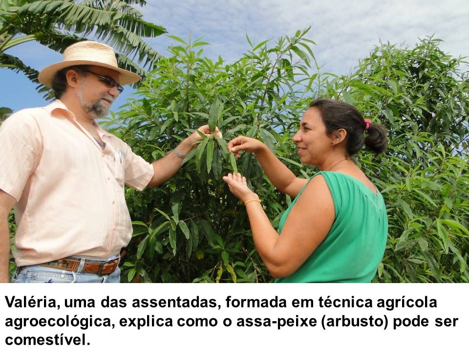 Valéria, uma das assentadas, formada em técnica agrícola agroecológica, explica como o assa-peixe (arbusto) pode ser comestível.