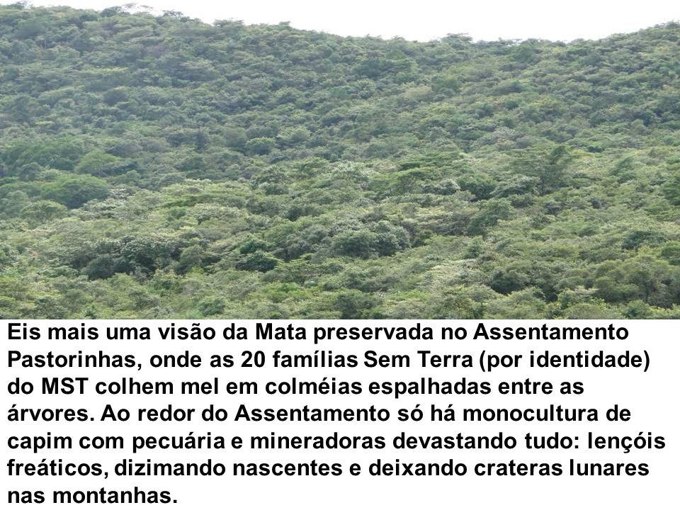Eis mais uma visão da Mata preservada no Assentamento Pastorinhas, onde as 20 famílias Sem Terra (por identidade) do MST colhem mel em colméias espalhadas entre as árvores.