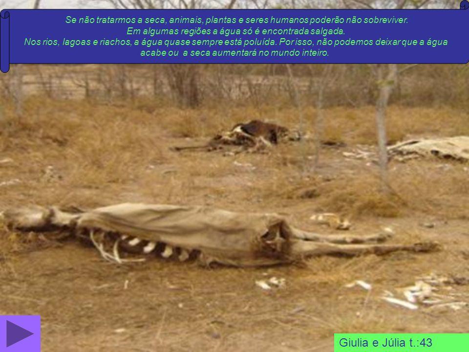 Se não tratarmos a seca, animais, plantas e seres humanos poderão não sobreviver.
