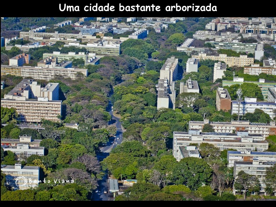 Uma cidade bastante arborizada