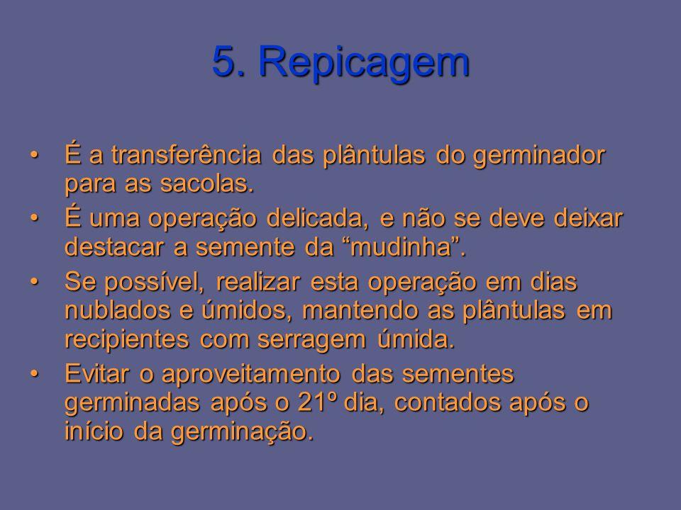 5. Repicagem É a transferência das plântulas do germinador para as sacolas.