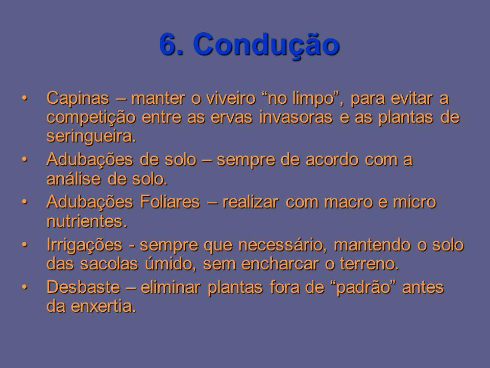 6. Condução Capinas – manter o viveiro no limpo , para evitar a competição entre as ervas invasoras e as plantas de seringueira.