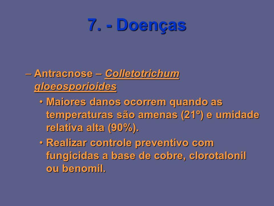 7. - Doenças Antracnose – Colletotrichum gloeosporioides