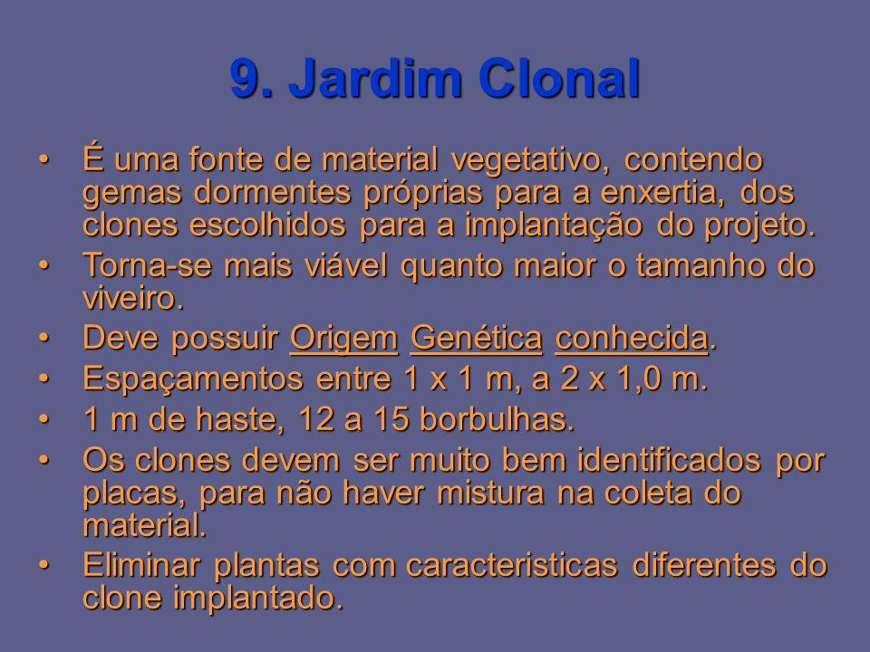 9. Jardim Clonal