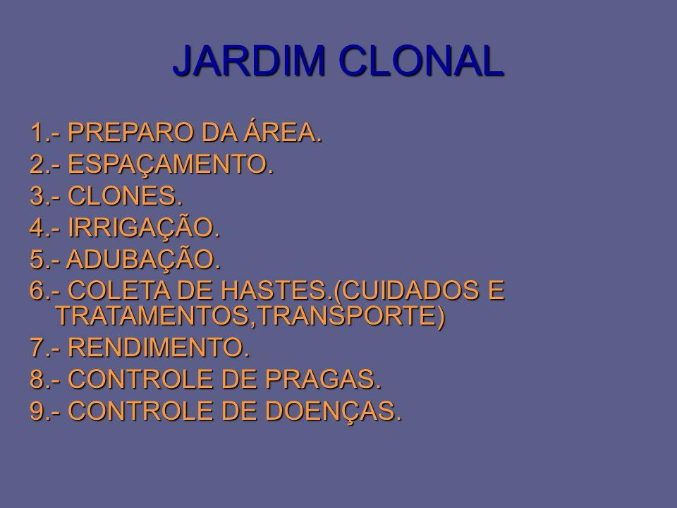 JARDIM CLONAL 1.- PREPARO DA ÁREA. 2.- ESPAÇAMENTO. 3.- CLONES.