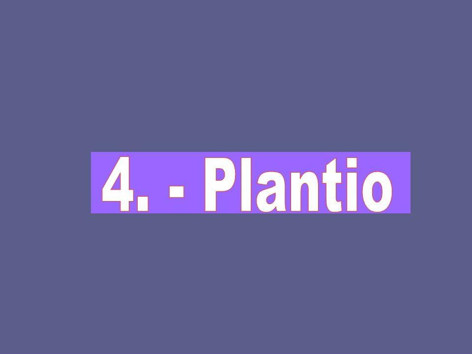 4. - Plantio