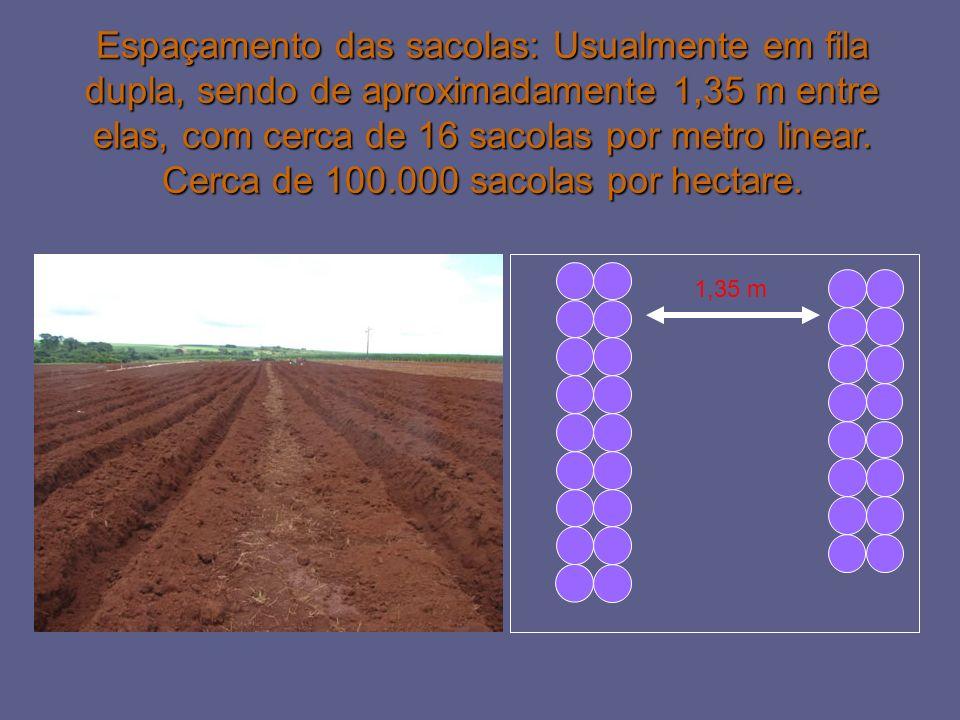 Espaçamento das sacolas: Usualmente em fila dupla, sendo de aproximadamente 1,35 m entre elas, com cerca de 16 sacolas por metro linear. Cerca de 100.000 sacolas por hectare.