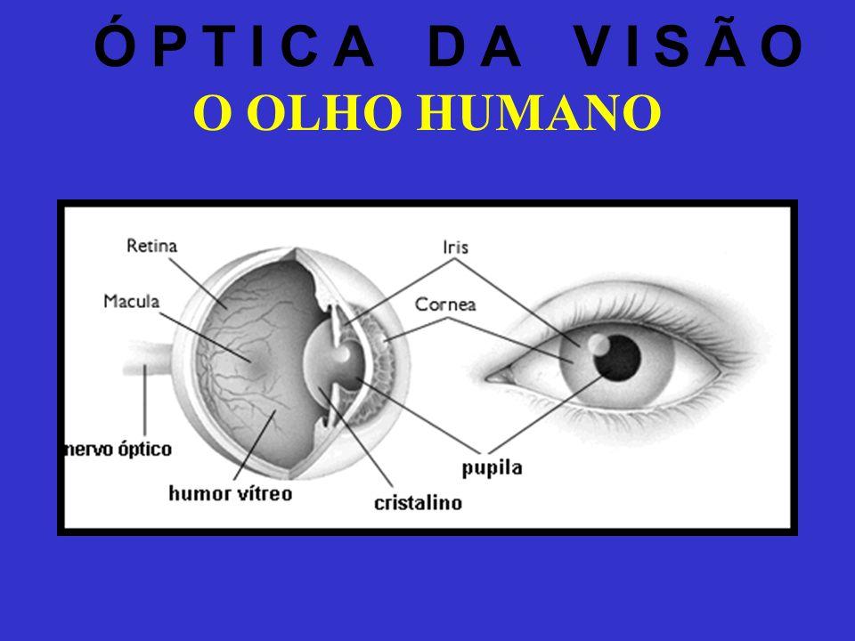 ÓPTICA DA VISÃO O OLHO HUMANO