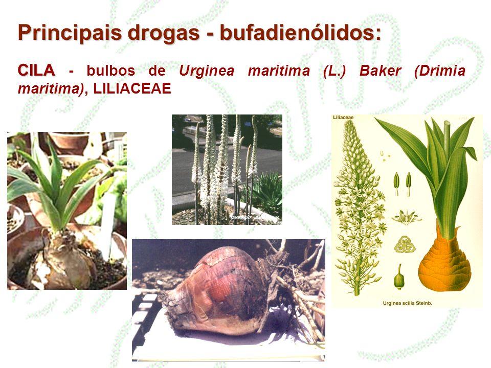 Principais drogas - bufadienólidos: