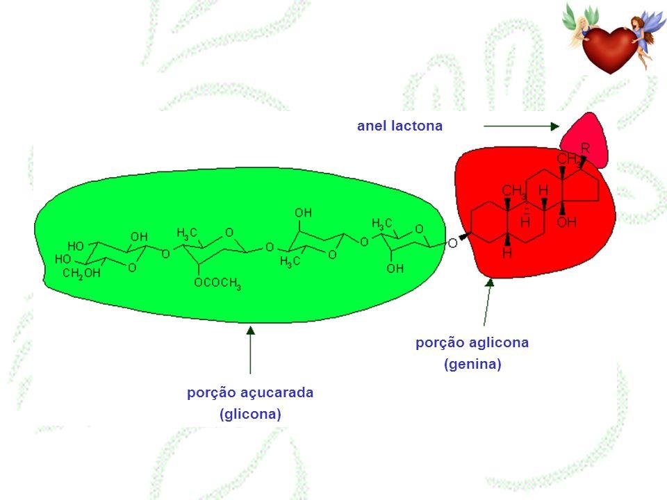 porção açucarada (glicona) porção aglicona (genina)