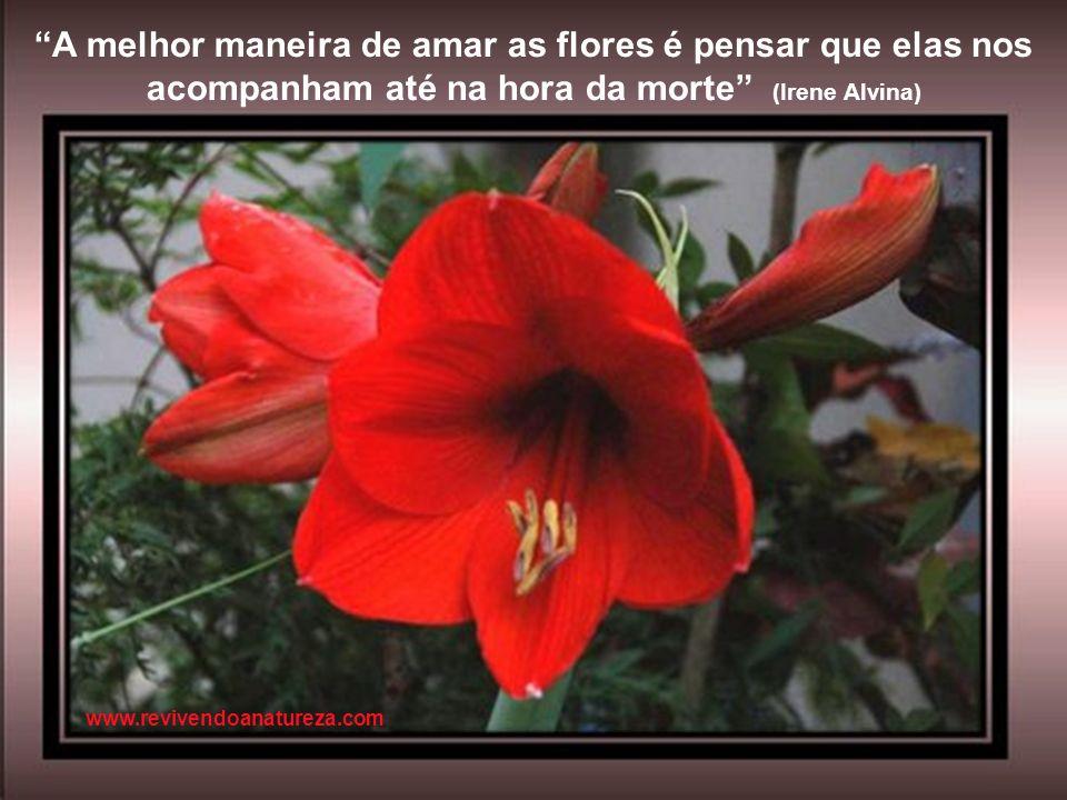 A melhor maneira de amar as flores é pensar que elas nos