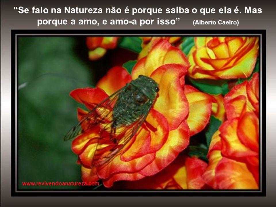 Se falo na Natureza não é porque saiba o que ela é