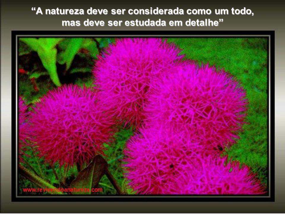 A natureza deve ser considerada como um todo,