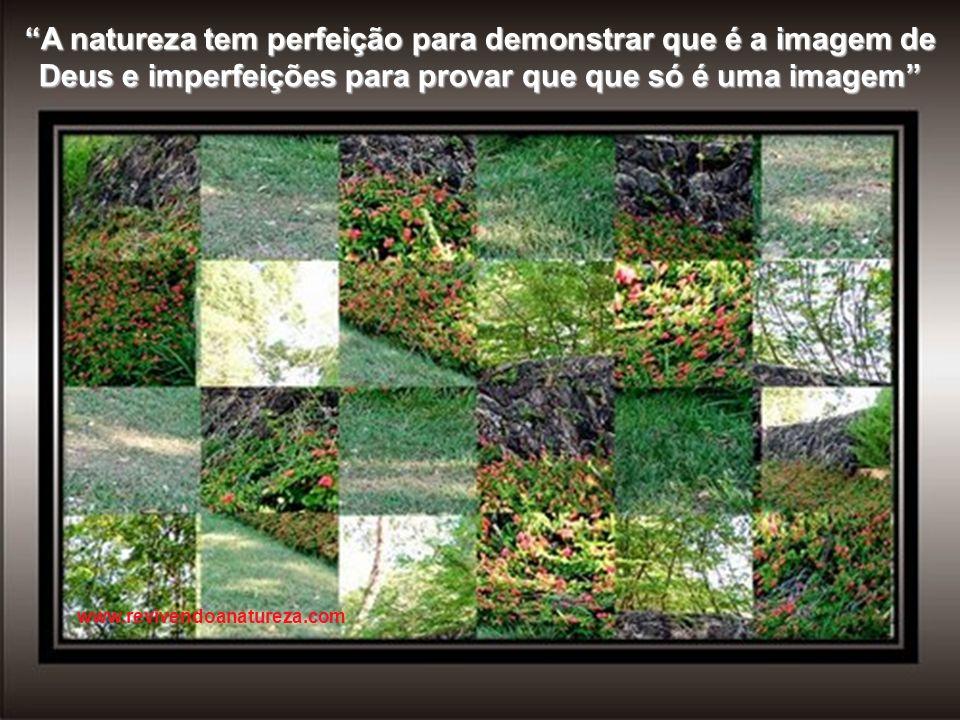 A natureza tem perfeição para demonstrar que é a imagem de Deus e imperfeições para provar que que só é uma imagem