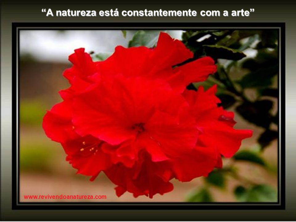 A natureza está constantemente com a arte