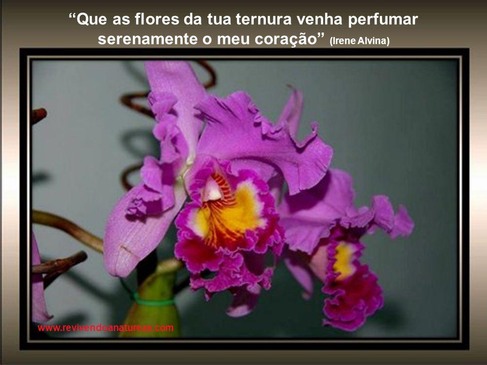 Que as flores da tua ternura venha perfumar