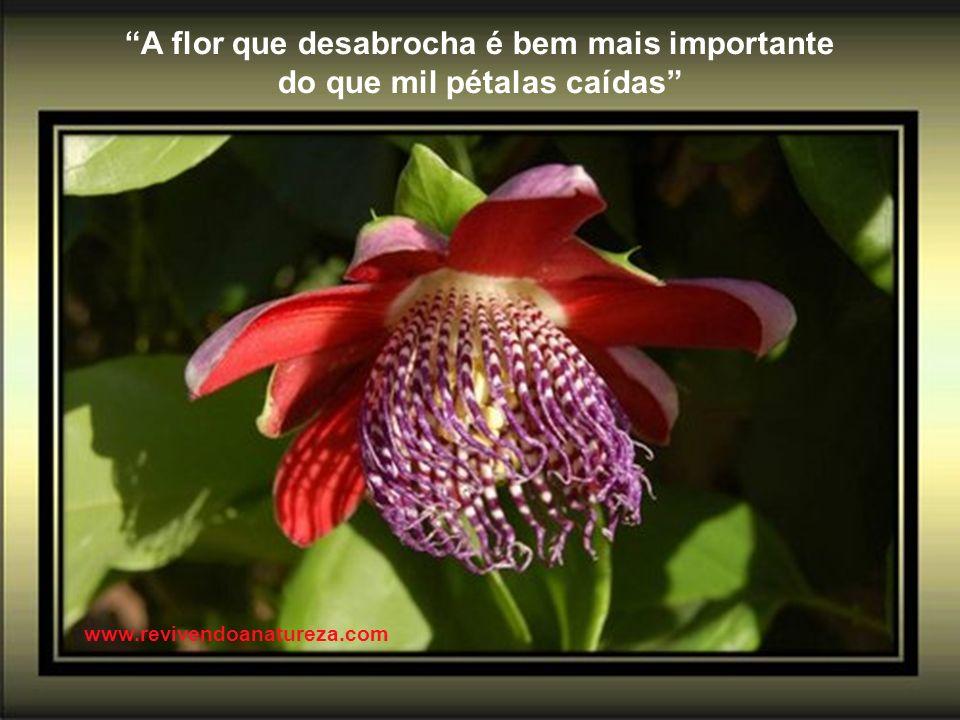 A flor que desabrocha é bem mais importante