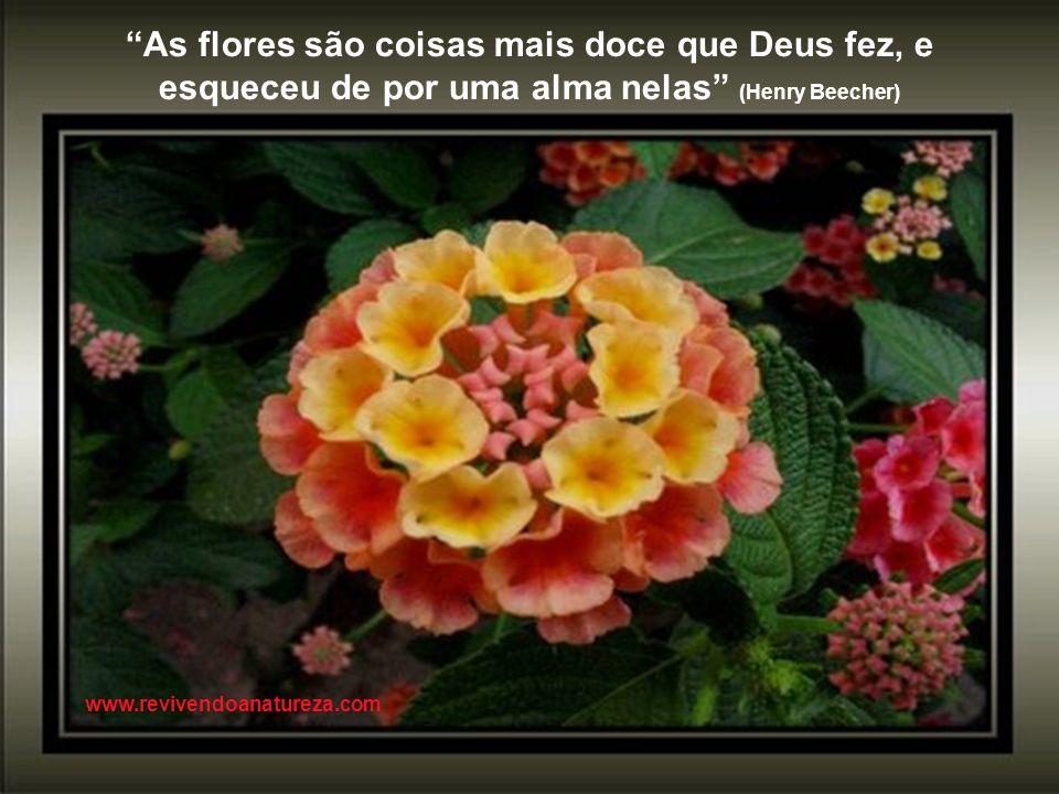 As flores são coisas mais doce que Deus fez, e