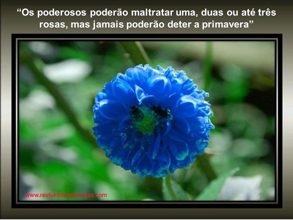 Os poderosos poderão maltratar uma, duas ou até três rosas, mas jamais poderão deter a primavera