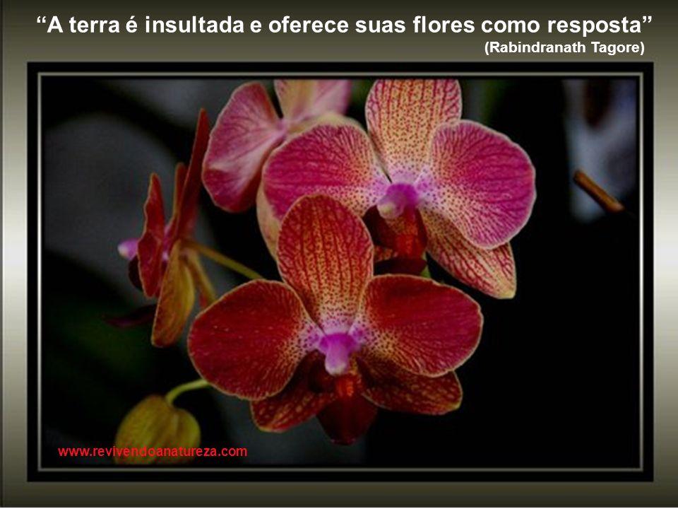 A terra é insultada e oferece suas flores como resposta