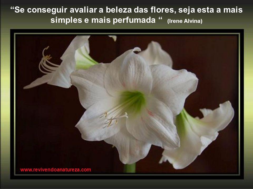 Se conseguir avaliar a beleza das flores, seja esta a mais simples e mais perfumada (Irene Alvina)