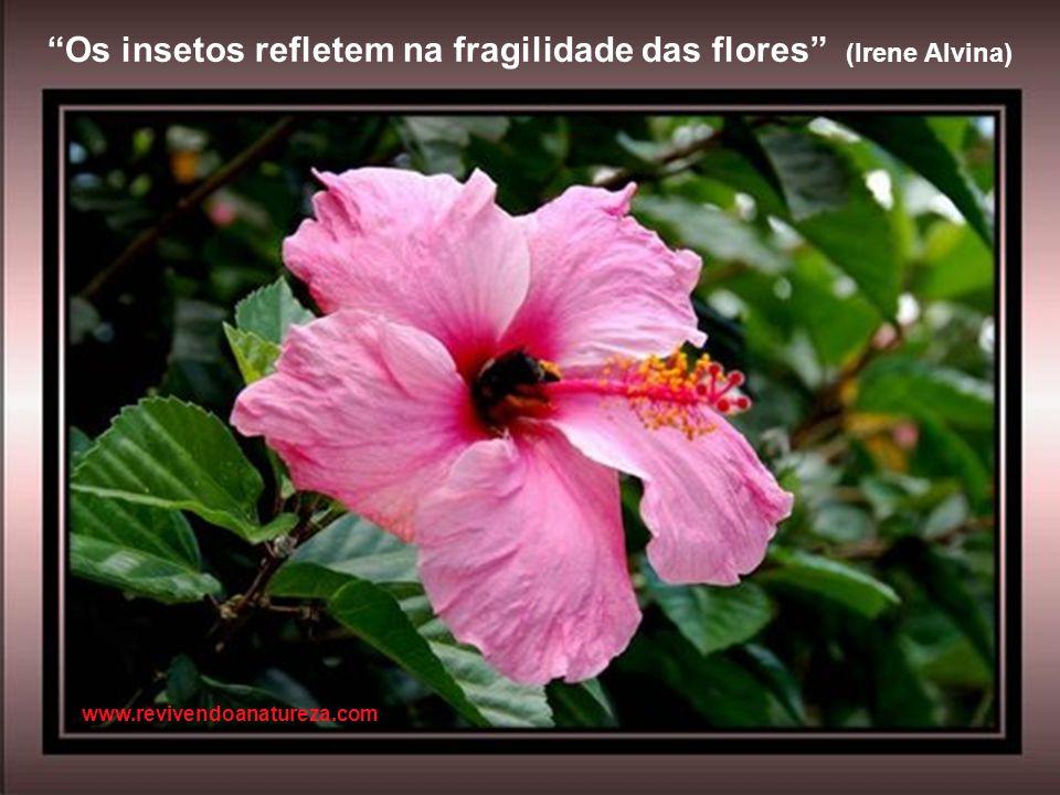 Os insetos refletem na fragilidade das flores (Irene Alvina)