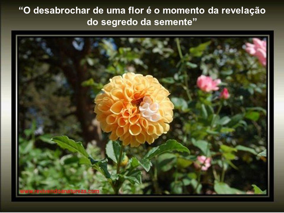 O desabrochar de uma flor é o momento da revelação