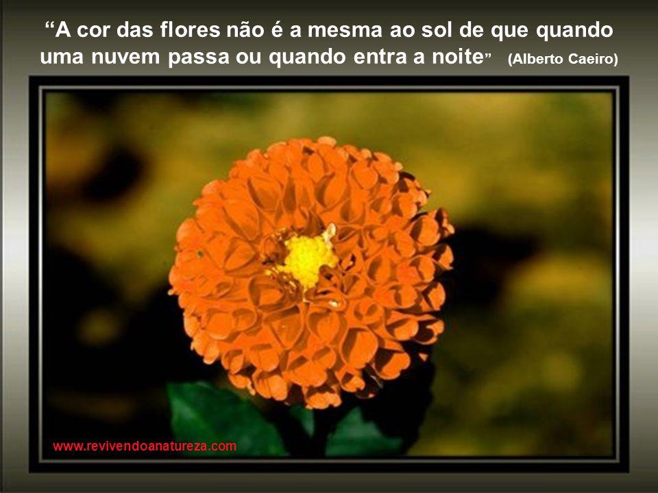 A cor das flores não é a mesma ao sol de que quando