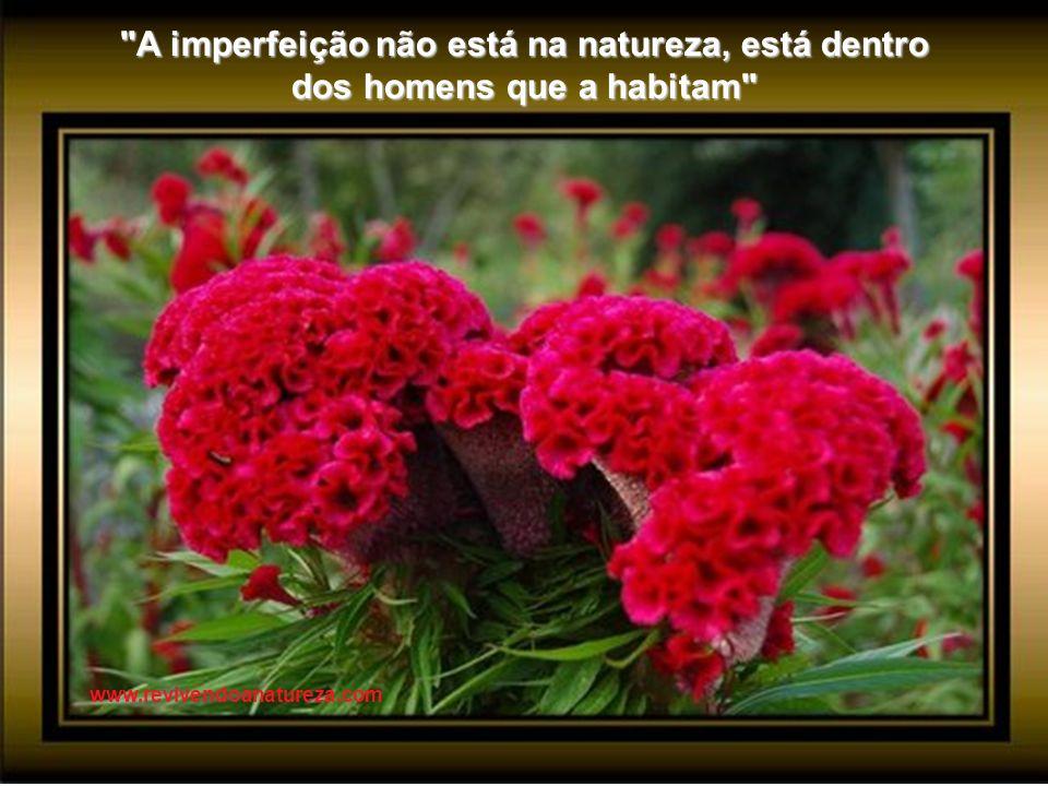 A imperfeição não está na natureza, está dentro