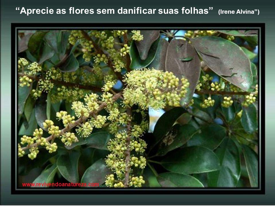 Aprecie as flores sem danificar suas folhas (Irene Alvina )