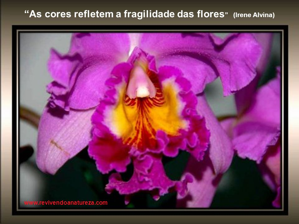 As cores refletem a fragilidade das flores (Irene Alvina)