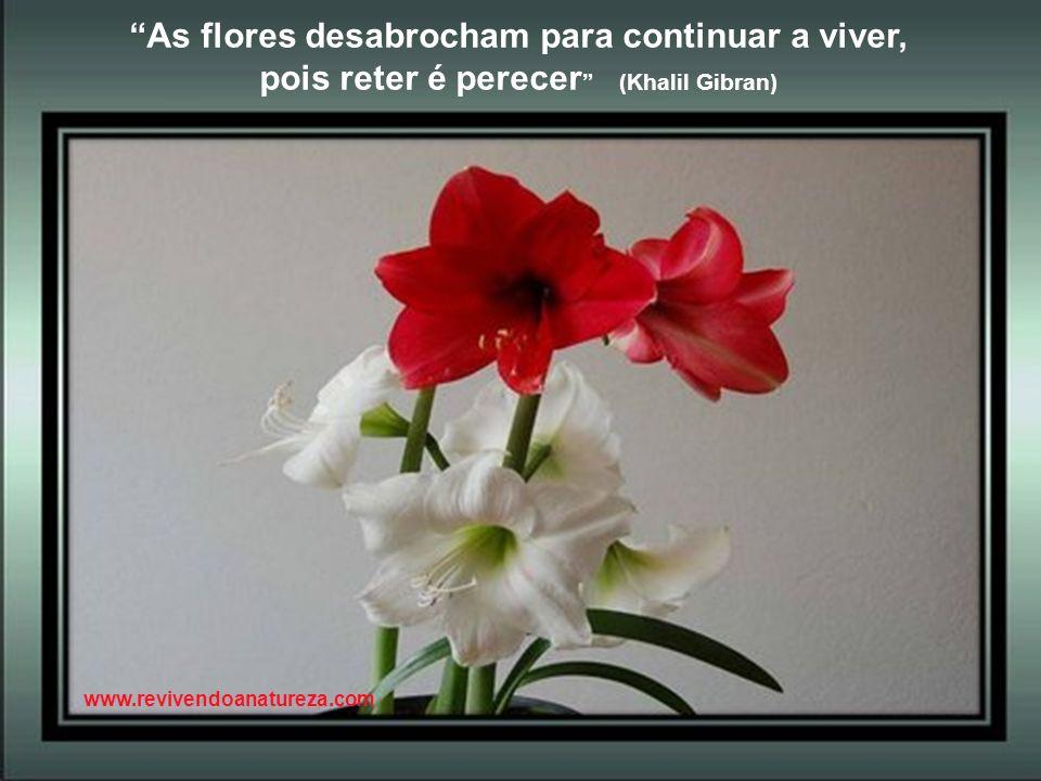 As flores desabrocham para continuar a viver,
