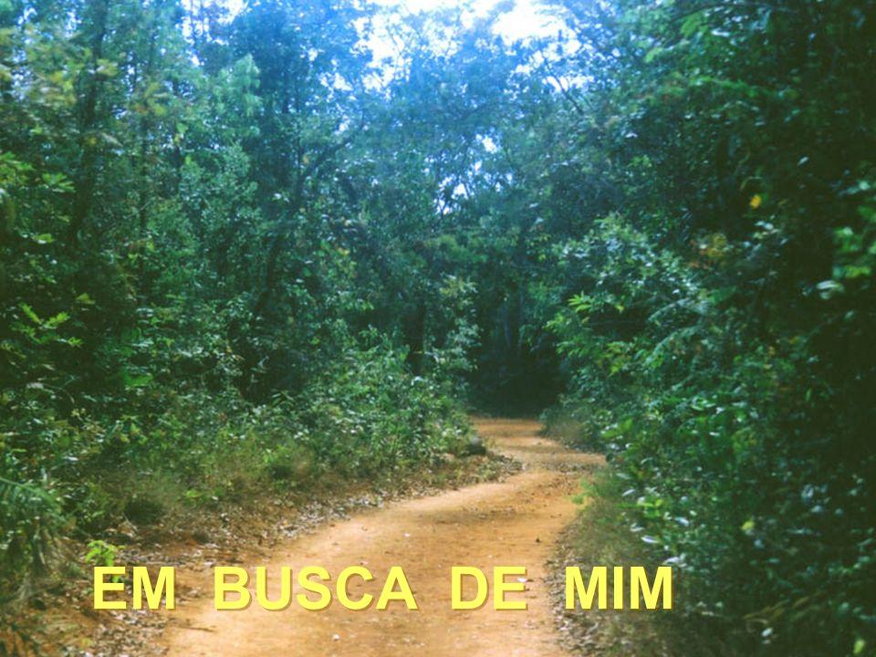 . EM BUSCA DE MIM