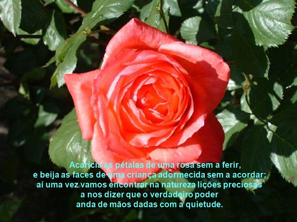 Acaricia as pétalas de uma rosa sem a ferir,